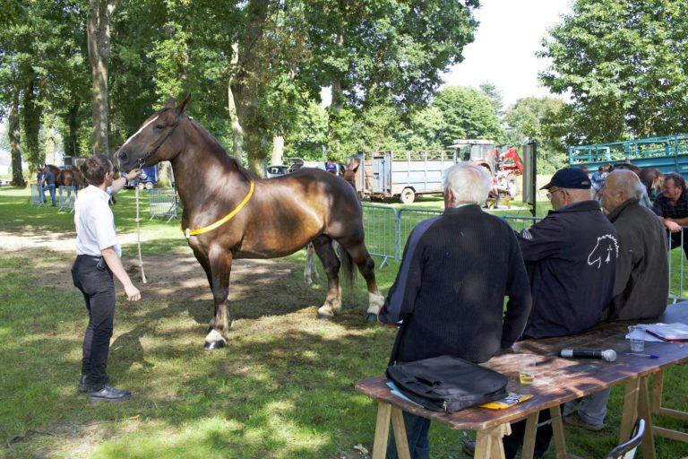 concours-cheval-breton-021