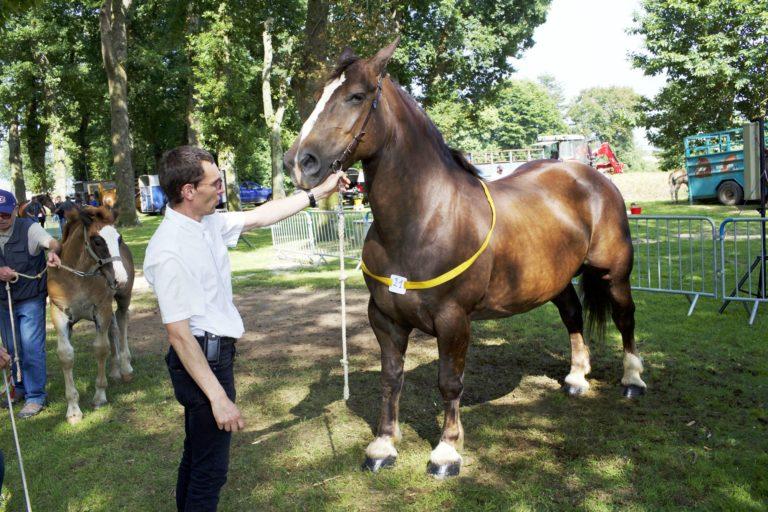 concours-cheval-breton-022